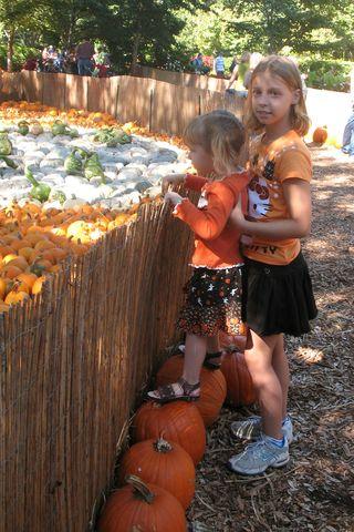 AddieElisePumpkins
