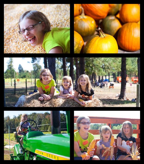 PumpkinPatchStoryboard1-600