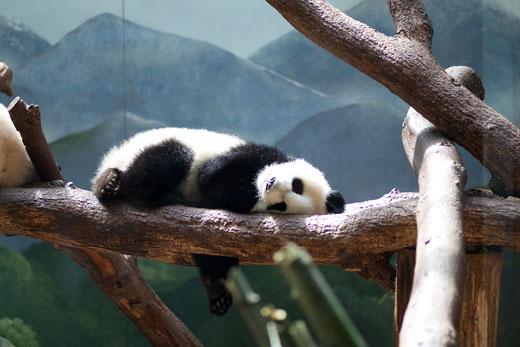Panda2-520