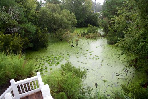 Swamp2-520