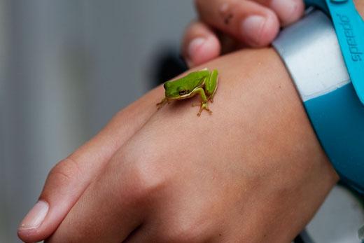 Frog2-520