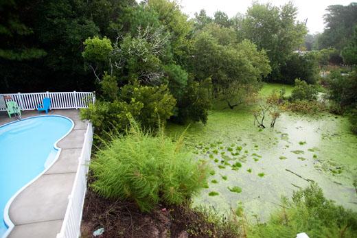 Swamp3-520